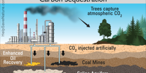 Carbon Sequestration 101